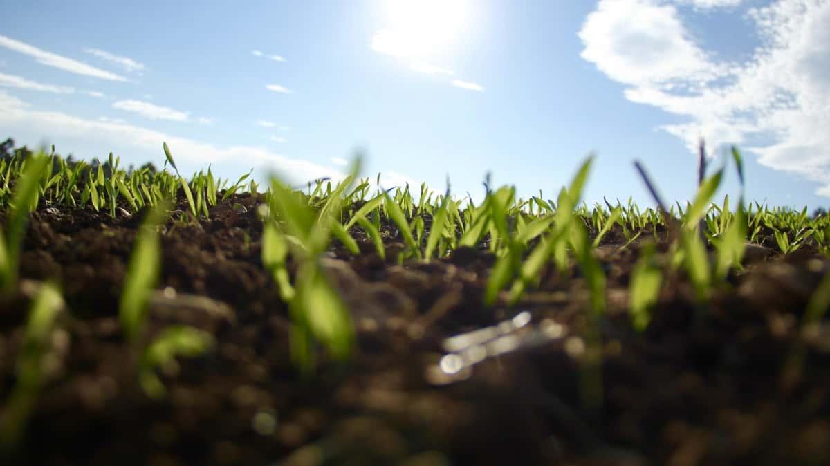 Adding dirt over grass