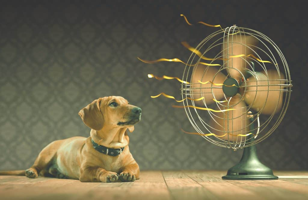 A dog being cooled down by a fan