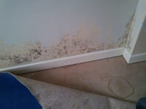 Lots of mold condensation on a drywall with wallpaper