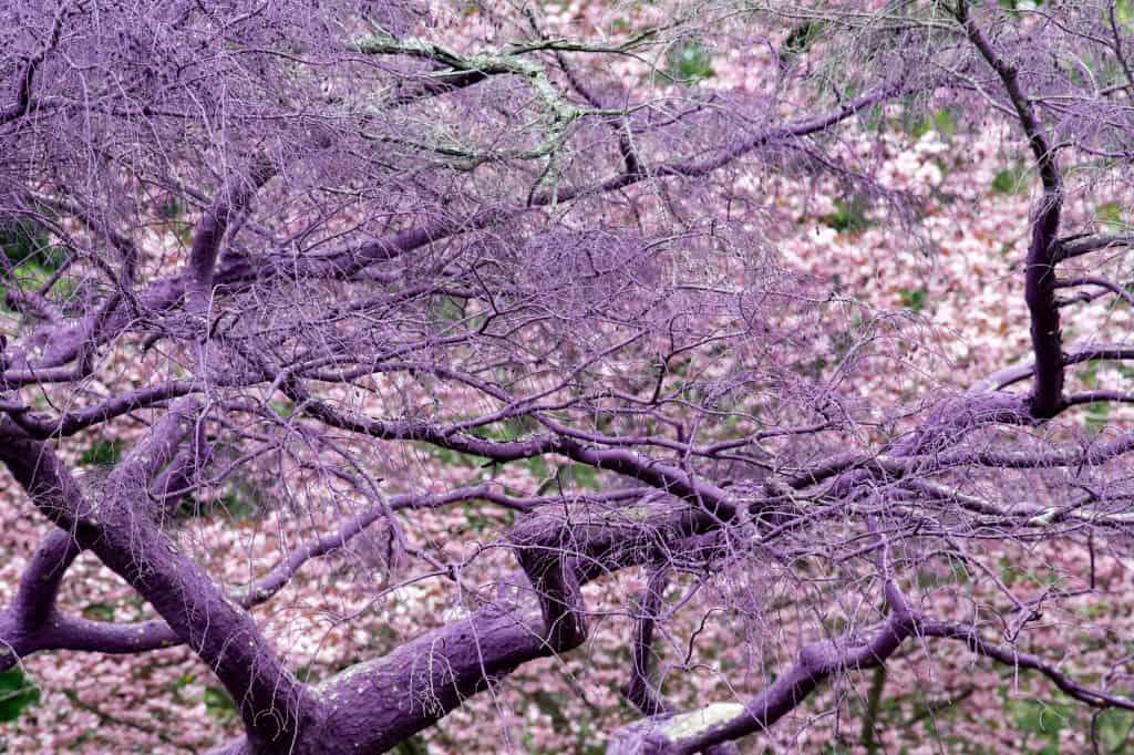 Purple violet painted tree